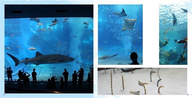 沖縄旅行フォトブック(美ら海水族館)