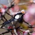 春の色は暖かい