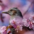 春の柔らかさ
