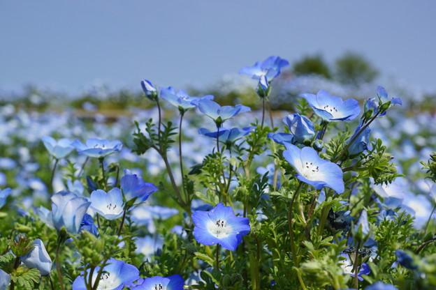 花が空の色に染まった