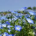 写真: 花が空の色に染まった