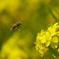 写真: まっ黄色だわい