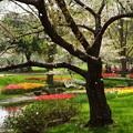 写真: 桜がファインダーに降り注ぐ幸せ