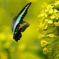 黄色い舞台に舞う青い羽根