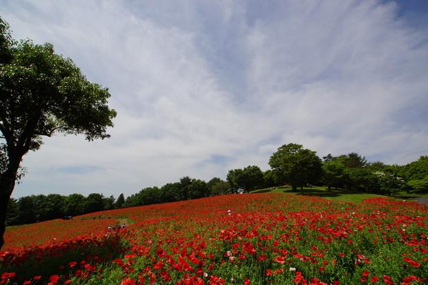 写真: 風にも初夏の香り