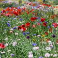 写真: お花を撮りたいのは・・・あなただけじゃない