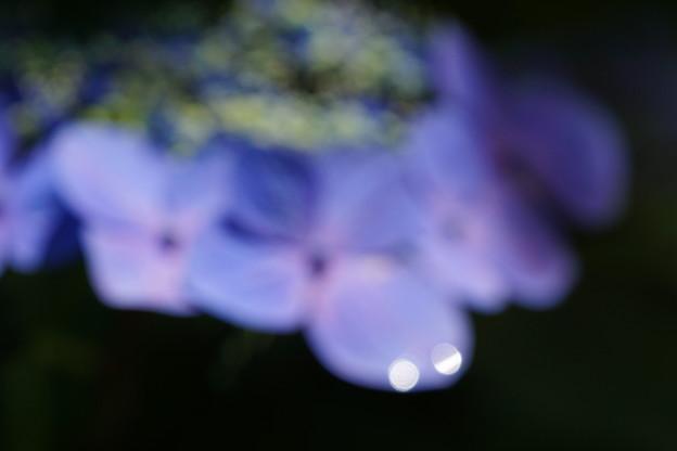 花のつぶやき