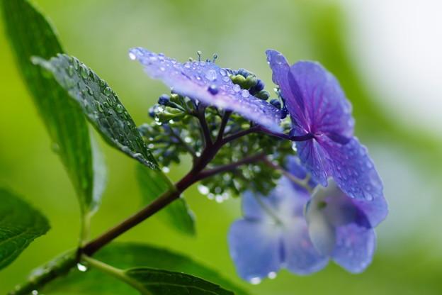 雨の中の撮影も、これまた楽し