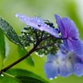 写真: 雨の中の撮影も、これまた楽し