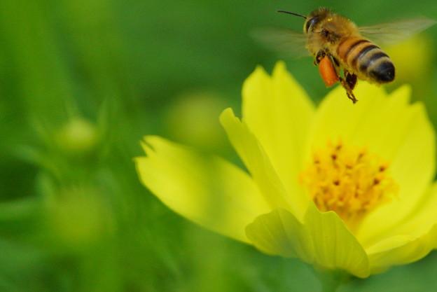 写真: ハチさん 来ないなぁ~