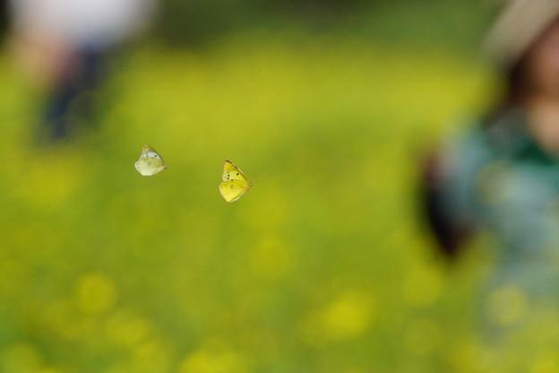 蝶と御婦人