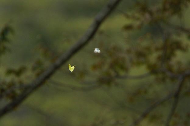 森の中を飛ぶ