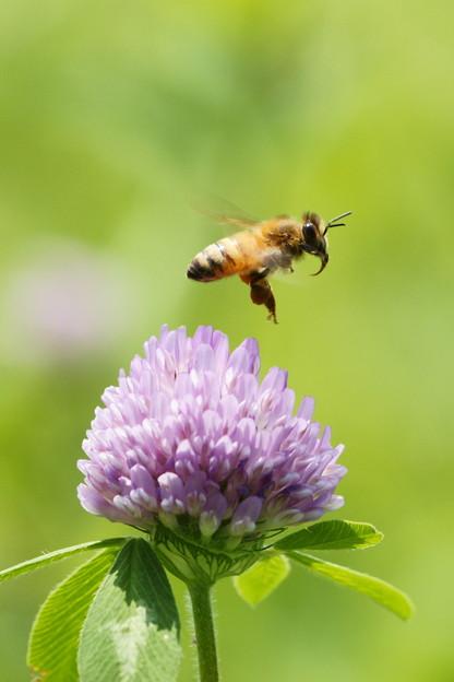 紫詰草の涼やかさ
