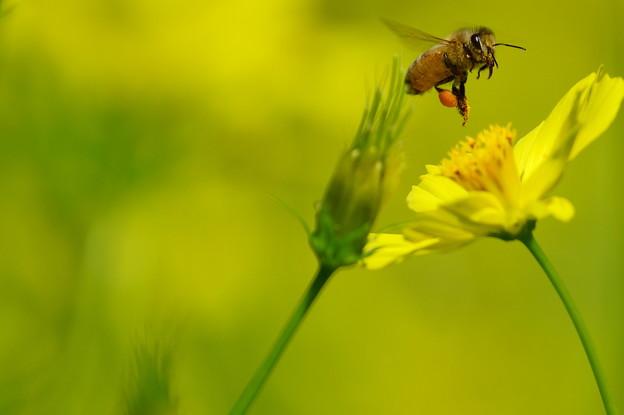 台風前日の蜂さん