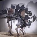 Photos: 恐竜の憂鬱