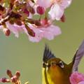 Photos: 春待ち遠し