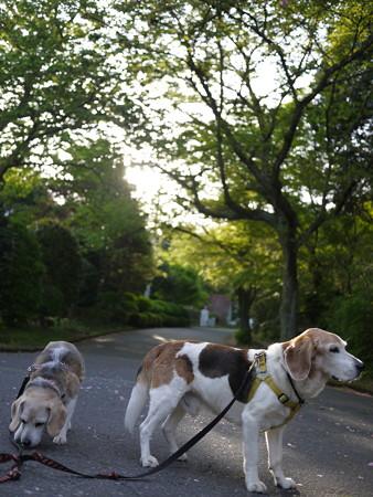 五月の爽やかなマリうみ山@ビーグルがいる南箱根の景色
