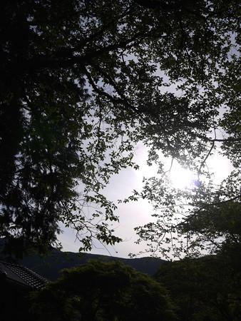 木漏れ日@ビーグルがいる南箱根の景色