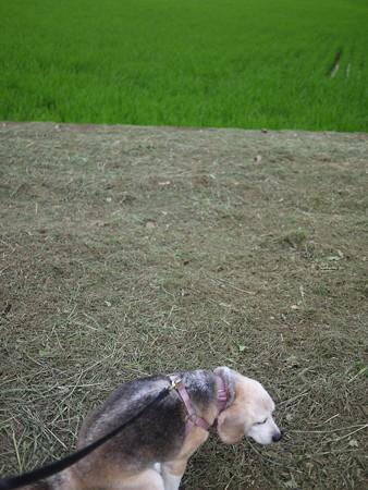 草刈りしたばっかりに、うみちゃん、、、ダッフンダー