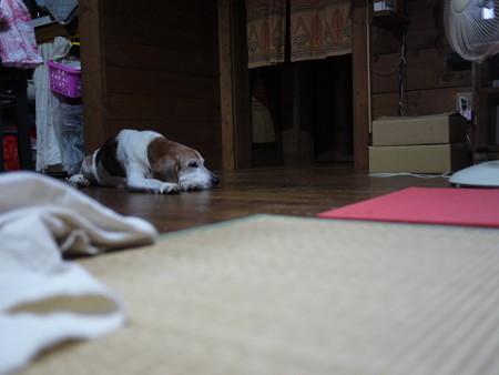 マリンは床の上でクールダウン