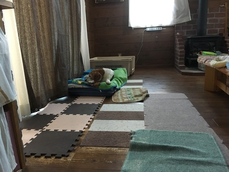 マリンのお気に入りのベッド