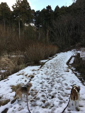 この日はちょっと久しぶりの山道散歩しました!