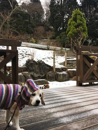 また雪でちゅか!(と、ぶーたれ姫)