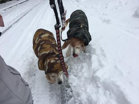 とうとうこのコートを着るくらいの大雪