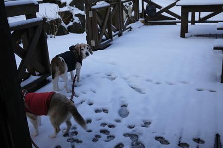 いきなり雪っす(いつの写真だよ)