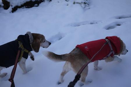 シニアだけど頑張って雪道歩くよ