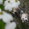 写真: なんの花だろ?とうみ姫