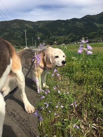 お花とプリティうみちゃん