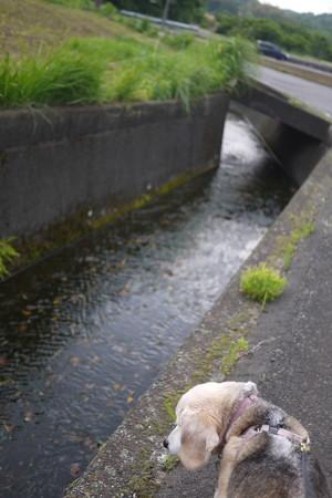 用水路とうみちゃん(なかなか撮るのが難しい)
