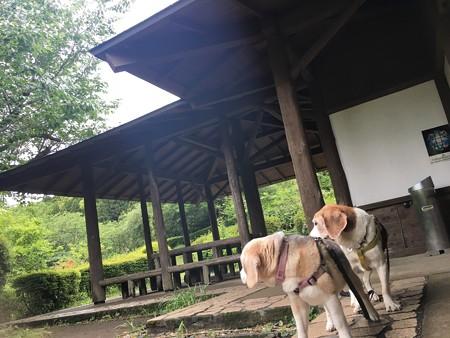 今度は2匹ともあっち向いてホイっ!in姫の沢@マリうみ
