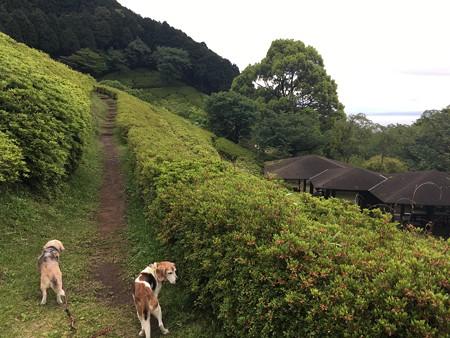 おかーさん、頂上までいこうよ!(今日はダメよー!)in姫の沢@マリうみ