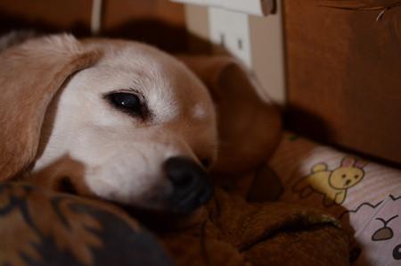 眠くなってきたでちゅ@Nikon D7000