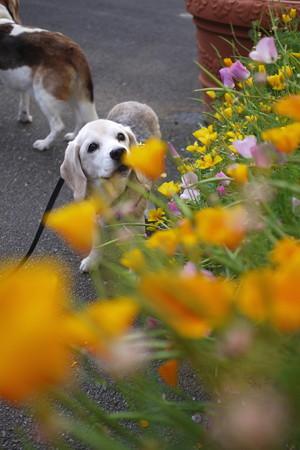 ほんとあたちってお花が似合でちょ@LUMIX