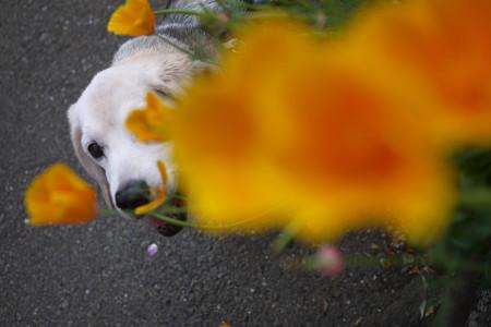 あーーー!笑ってるけどお花と被っちゃったよ@LUMIX