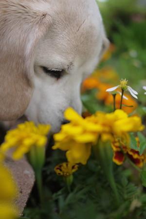 どなたかのお花がいっぱいあるお家のお庭で撮影会したいなー