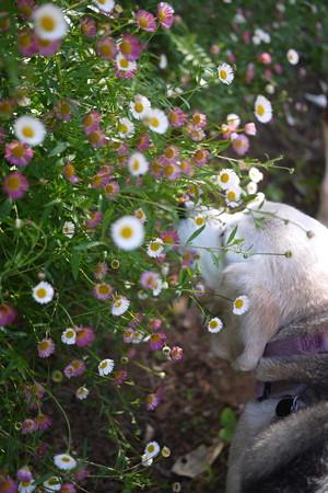 可愛い小さなお花とうみ姫くんくん