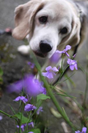 これ、ダイコンの花って聞いてるんでちゅけど、本当でちゅか?