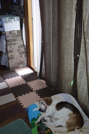 暑くなってきたので窓を開け遮光カーテンつけました(LUMIX)