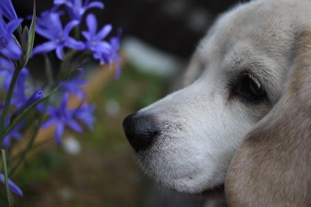 この写真良いな!紫のお花とうみ姫(お花とマリうみ@LUMIX)
