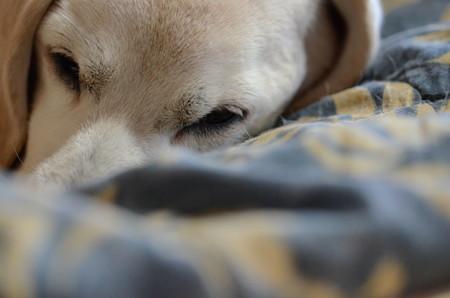 もぉー、パシャパシャうるしゃいでちゅよ、寝てるのに(Nikon D7000)