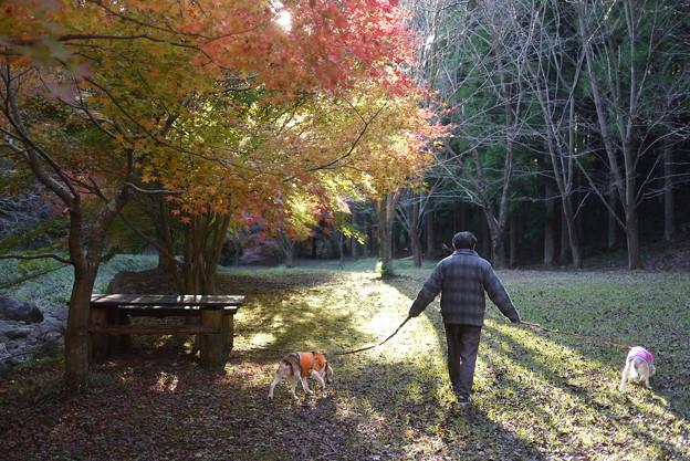 家族で森の公園散歩
