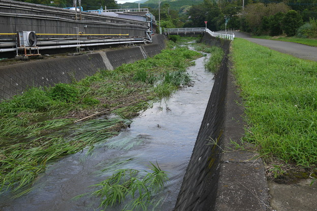 半分は流れ、半分は流れが悪い@函南町柿沢川