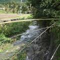 Photos: 暴風によって竹が倒れてます@函南町柿沢川