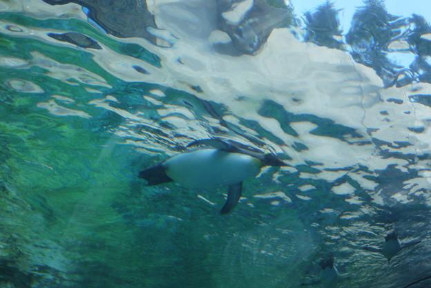 空飛ぶペンギン@北海道一人旅