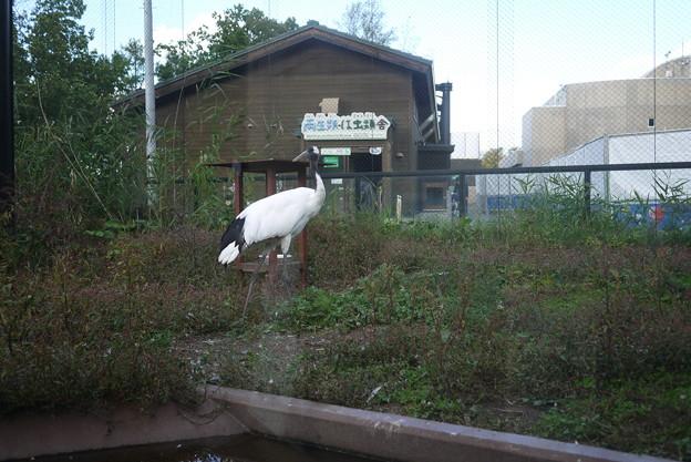 上を向いた瞬間に撮れた!動物撮影は待つこと!@北海道一人旅