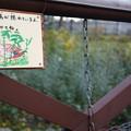 Photos: ふむふむ探してみようかね!@北海道一人旅